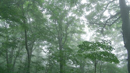 Forest in Aomori Prefecture, Japan Footage