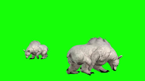 804 4K ANIMALS TWO footages 3D computer generated white bear walking and attacking CG動画