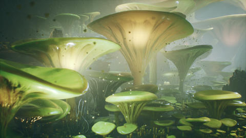 Fantasy mushrooms in a magic forest. Beautiful magic mushrooms in the lost forest and fireflies on Animation