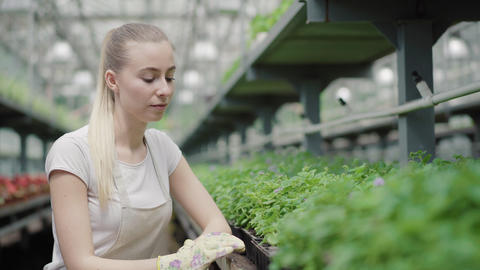 Exhausted young woman taking care of green plants in hothouse. Portrait of tired Live Action
