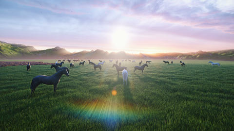 A herd of young horses graze on a picturesque green meadow on a beautiful summer morning, Animation