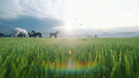 A herd of horses graze on a picturesque green meadow on a beautiful summer evening, illuminated by Animation