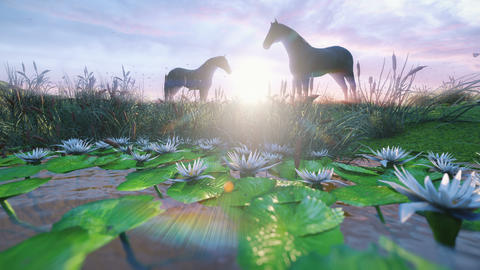 Two young horses graze on a picturesque green meadow near a beautiful pond on a beautiful spring Animation