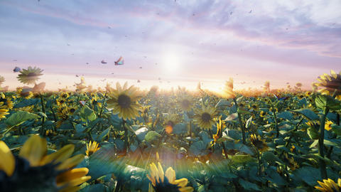 Sunflowers in the field at sunrise. Beautiful fields with sunflowers, butterflies and insects in Animation