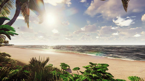 Branches of palm trees and tropical plants in the wind at sunrise. Beautiful summer loop background Animation
