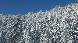 Snowy forest, Hokkaido, Japan Footage