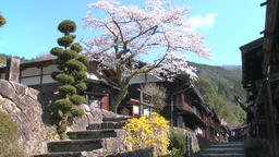Cherry blossoms at Tsumago Post Town, Nagano Prefecture, Japan Footage