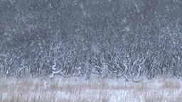 Snowy forest in Hokkaido, Japan Footage
