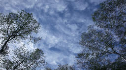 Trees and clouds moving in the sky Footage