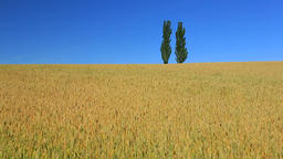 Wheat Field, Hokkaido, Japan Footage