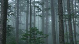 Forest in Hokkaido, Japan Footage