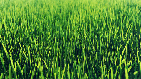 Beautiful video of morning green grass. Beautiful summer loop background Animation