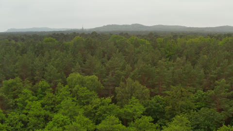Low Aerial Flight over Rich Green Tree Tops Forest with Overcast Foggy Sky and Live Action