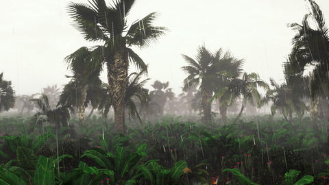 Panorama of green jungle during tropical rain. Green jungle trees and palm trees, fog and tropic Animation