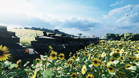Military tanks on a clear Sunny summer day on a field in the middle of sunflowers Animation