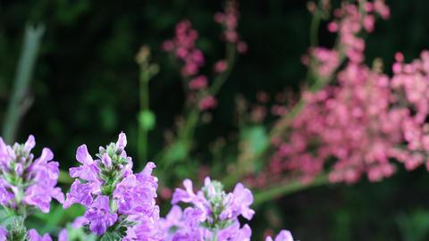 Beautiful summer garden flowers close-up. 4K Footage ライブ動画