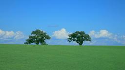 Trees on grassland, Hokkaido, Japan Footage