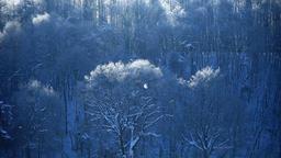 Rimed and snow, Hokkaido, Japan Footage