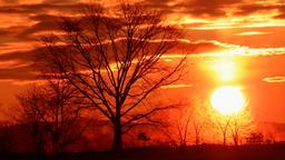 Trees silhouette against red sky at dawn, Hokkaido, Japan Footage
