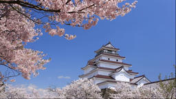 Cherry blossoms at Tsuruga Castle, Fukushima Prefecture, Japan Footage