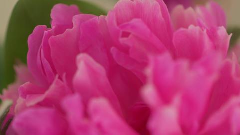 Flower Petals Macro GIF