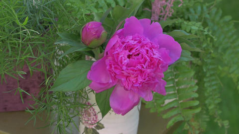 Floristics Peonies Flowers GIF