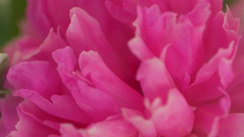 Macro Pink Flowers GIF
