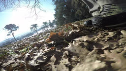 Low angle view of man walking on fallen leaves in the woods Footage