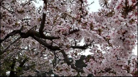 14tsunami japan Footage
