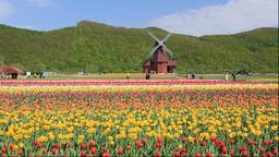 Kamiyube Tulip Park in Hokkaido Footage