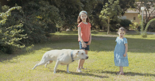 Two girls playing with a white dog outdoors Footage