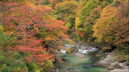 Autumn leaves at Minase river, Oyasu Gorge, Akita Prefecture, Japan Footage