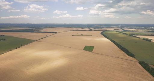 drone flight over a wheat field on a summer, sunny day Live Action