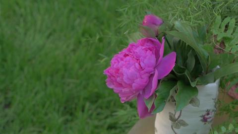 Peonies Flowers Floristics GIF