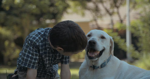 Young boy playing with a big white dog Footage