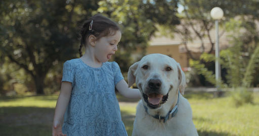 Little girl playing with a big white dog Footage