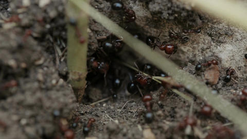 Macro shot of ants working in their nest