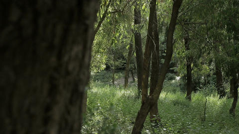 Tracking shot of a lush green forest
