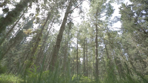 Tracking shot of a lush green forest Footage