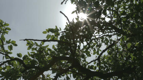 Tracking shot of sun rays shining through tree branches Footage