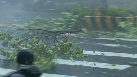 Fallen tree bouncing off police car in Typhoon Wind and Rain Footage