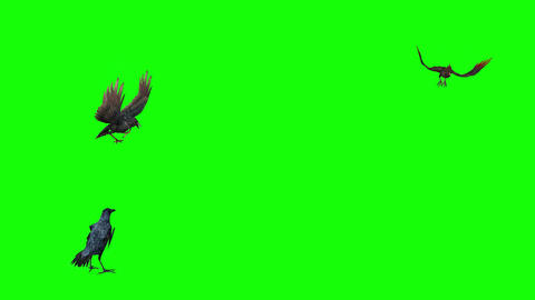 809 4k ANIMALS 3d computer generated CROWS flying Animation