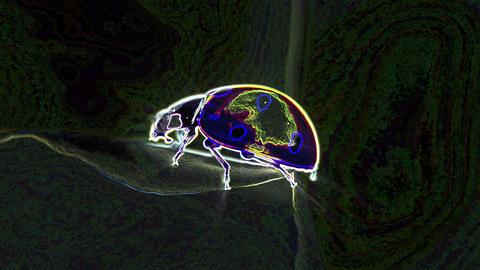 Glowing Neon Ladybug Loop Videos animados