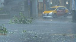 Trees blowing in surge of typhoon Wind and Rain Footage