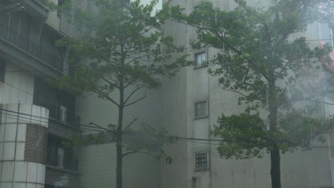 Trees in typhoon Wind surge and Rain Footage