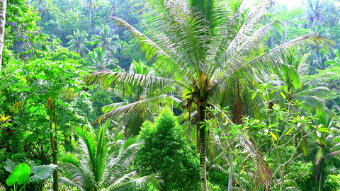 Abstract rainforest landscape with jungle plants. Indonesia Footage