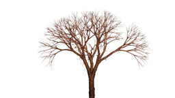 Dead tree growing and flowing in the wind, Alpha included Animation