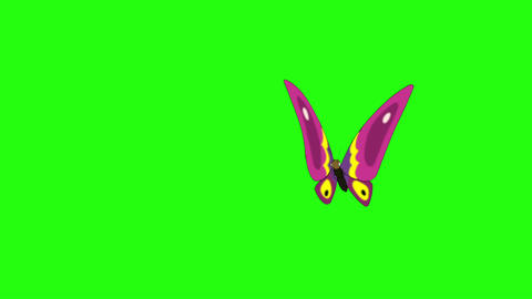 Pink butterfly flies in, sits and flies away chroma key Videos animados