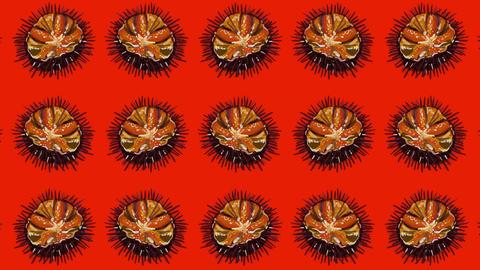 sea urchins Videos animados