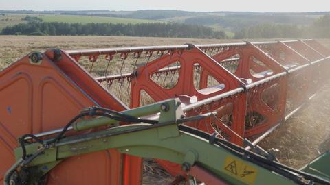 Seasonal harvesting of grain crops. Combine harvester in the field Live Action